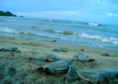 capurgana_avistamiento_tortugas
